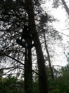 Klättrar träd för att rädda katt.